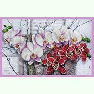 Симфония орхидей P-263