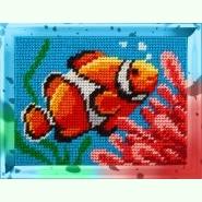 Коралові рифи X-2242
