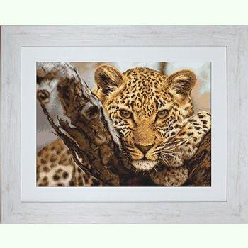 Леопард B525